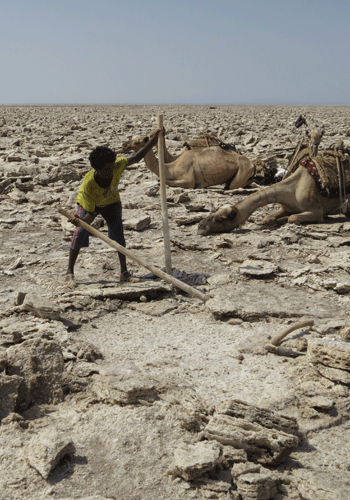 Cutting salt bricks in the Danakil.