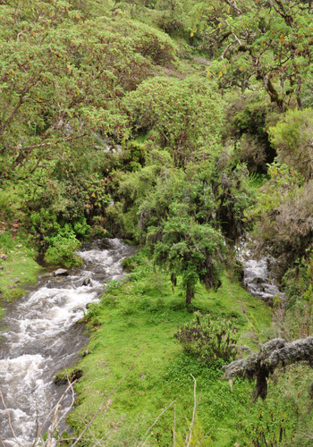 Bale Mountains National Park.