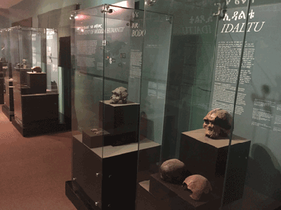 Exhibits at the National Museum in Addis Ababa.